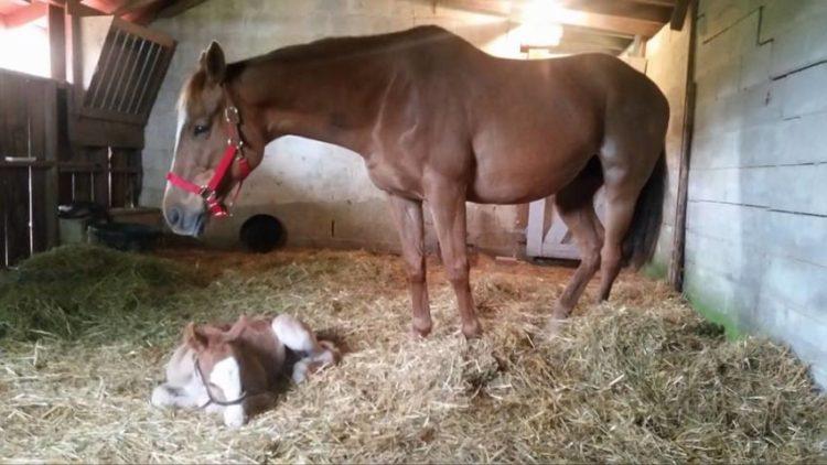 caballo-rechazado-mama-adoptiva7