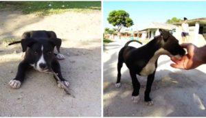 cachorrita-juega-con-turistas-en-cuba2 - copia