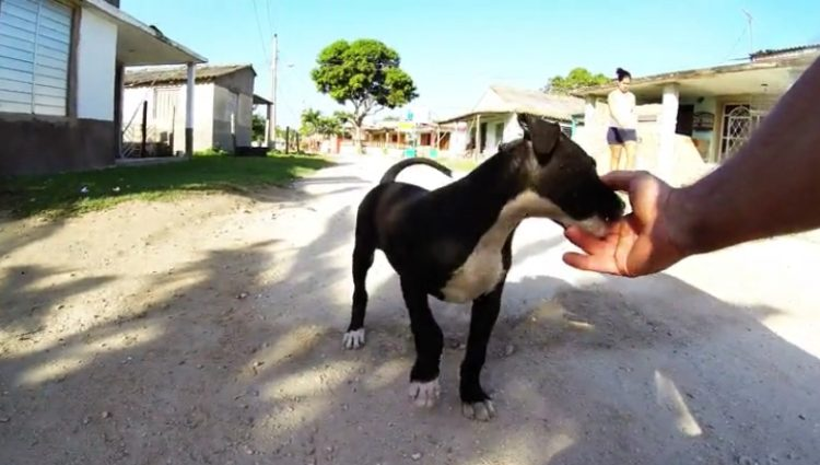 cachorrita-juega-con-turistas-en-cuba3