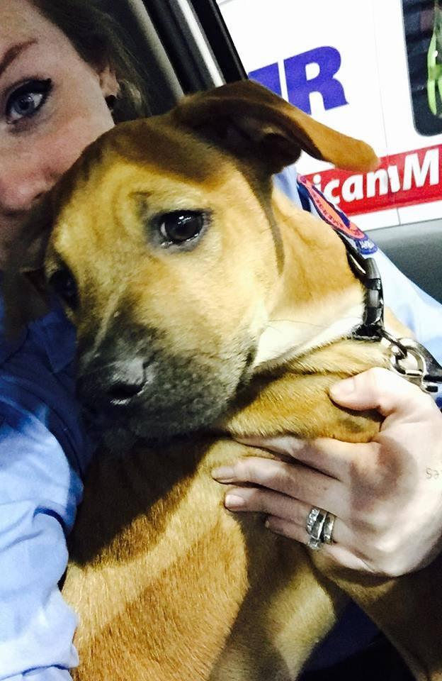 cachorro-corre-tras-ambulancia6