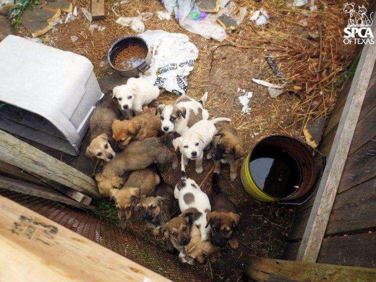cachorros atrapados en patio sucio 1