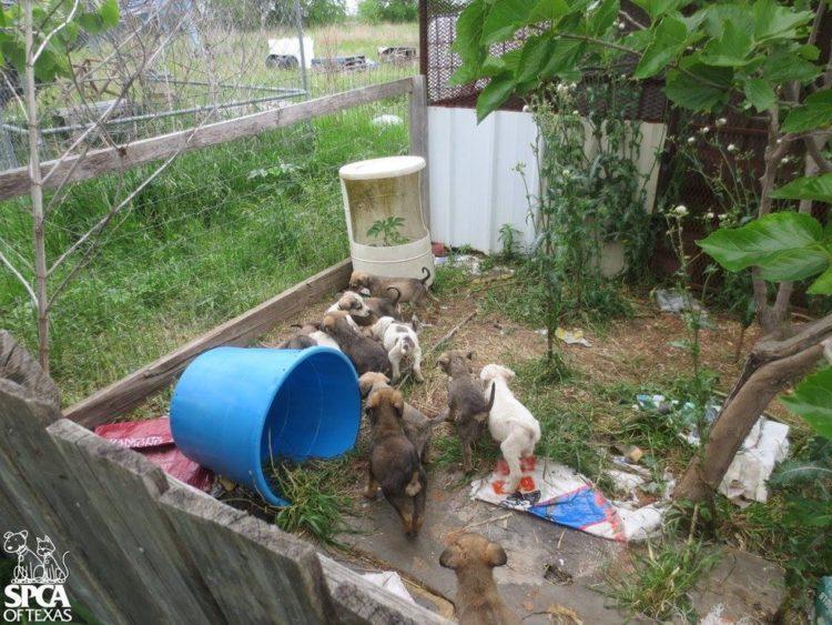 cachorros atrapados en patio sucio 2