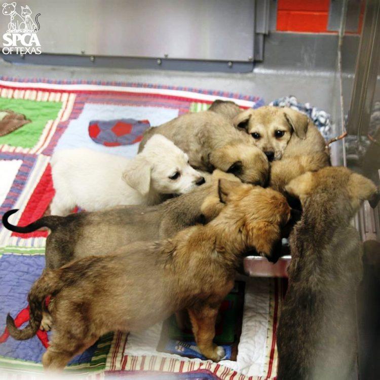 cachorros atrapados en patio sucio 8