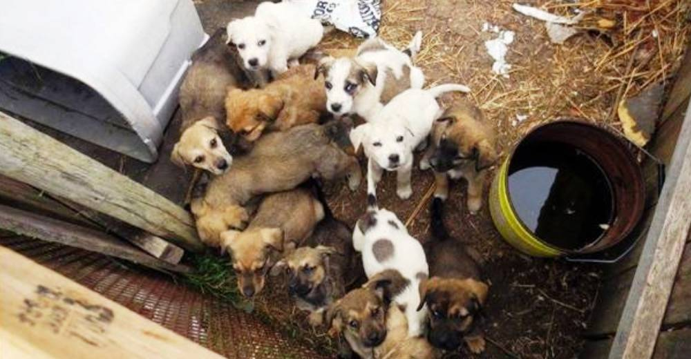 cachorros atrapados en patio sucio portada