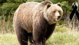 cazador-mata-oso-emblematico3 - copia