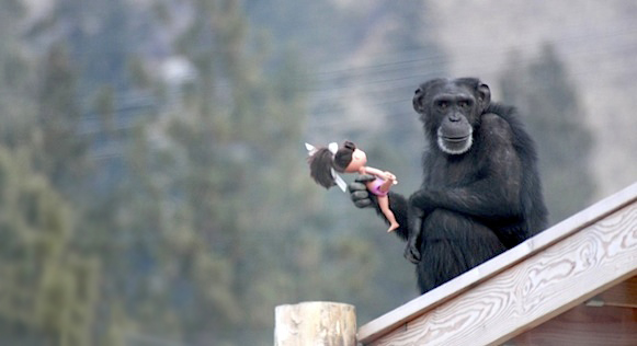 chimpance-foxie2