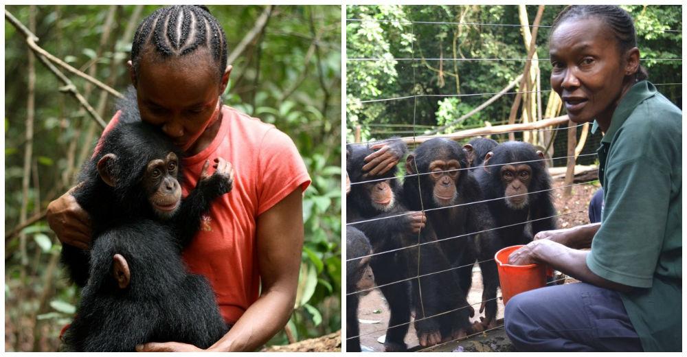 chimpances-cuidadora