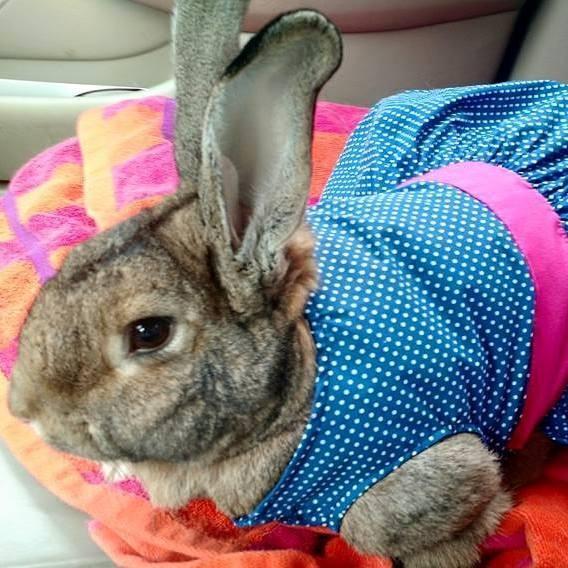 conejos-gigantes-rescatadas1