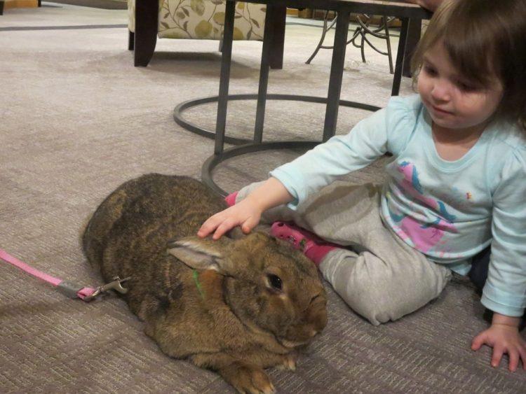 conejos-gigantes-rescatadas10
