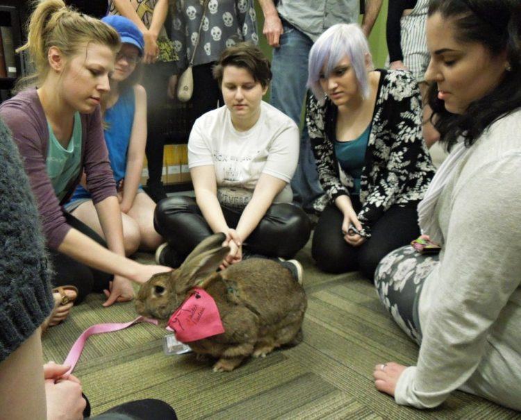 conejos-gigantes-rescatadas11
