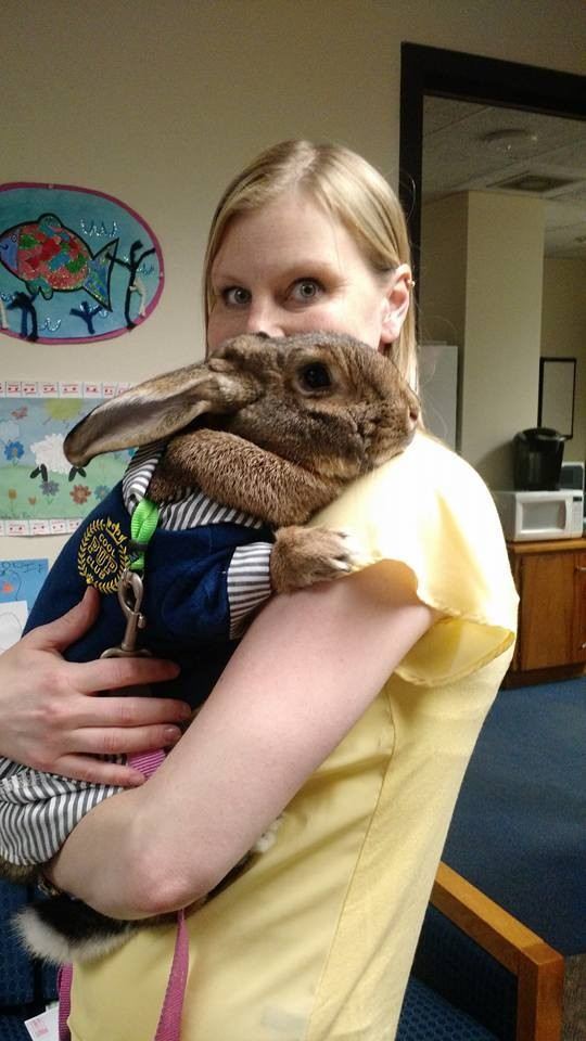 conejos-gigantes-rescatadas12