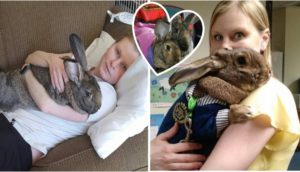 conejos-gigantes-rescatadas16