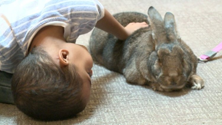conejos-gigantes-rescatadas3