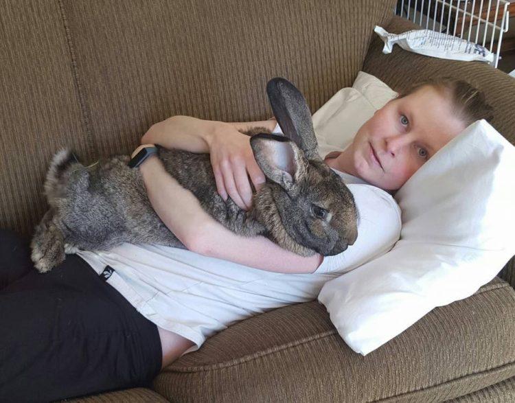 conejos-gigantes-rescatadas6