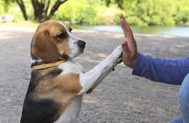 cosas para que tu perro viva más 10