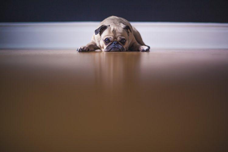 cosas para que tu perro viva más 11