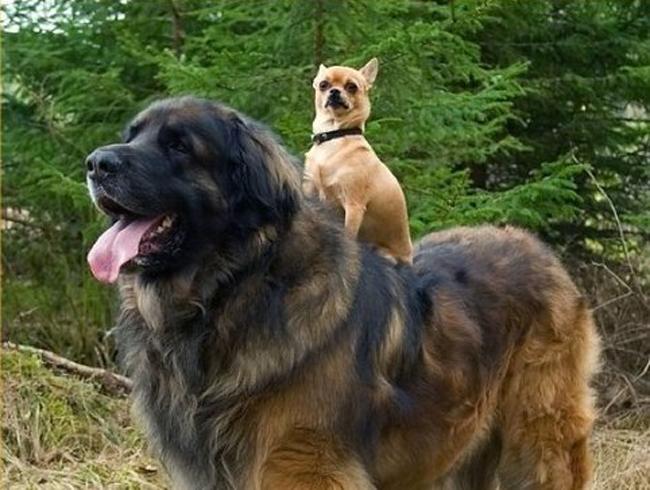 cosas para que tu perro viva más 3