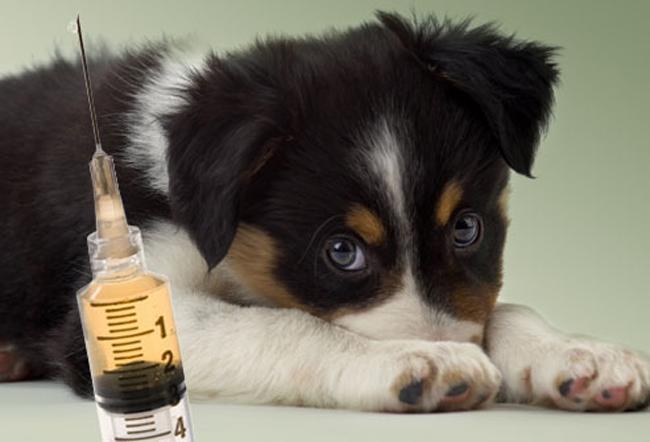cosas para que tu perro viva más 7