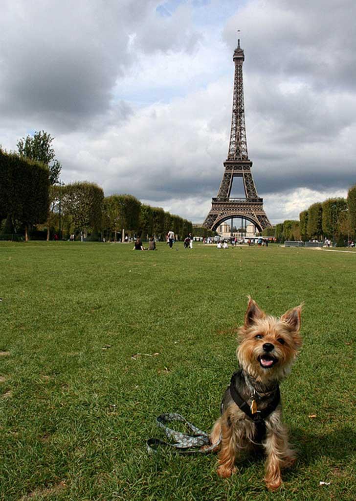 derechos animales en francia 2