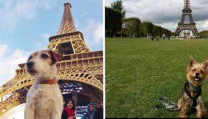 derechos animales en francia 6