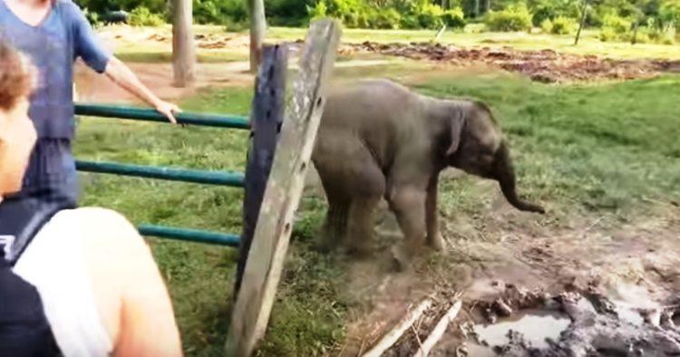 elefante-bebe-corre-por-su-vida2