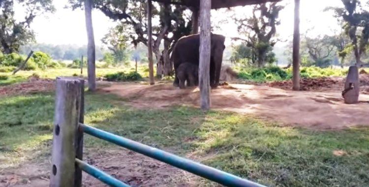 elefante-bebe-corre-por-su-vida5