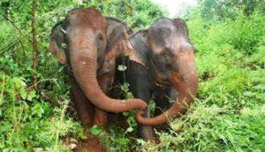 elefante-ciego-pierde-a-su-amigo1 - copia