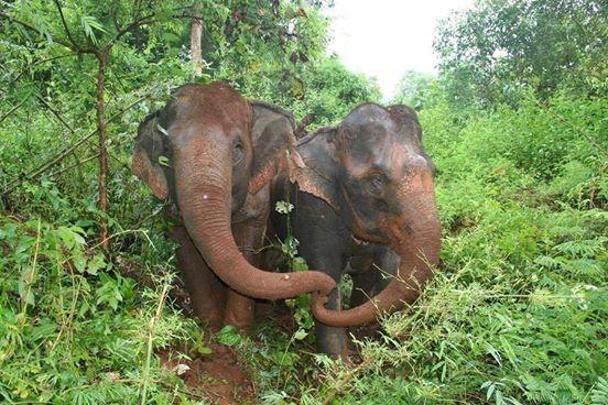 elefante-ciego-pierde-a-su-amigo1