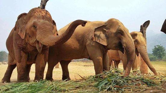 elefante-ciego-pierde-a-su-amigo2
