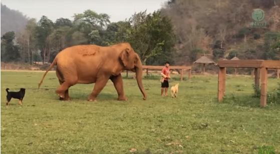 elefante-ciego-pierde-a-su-amigo6