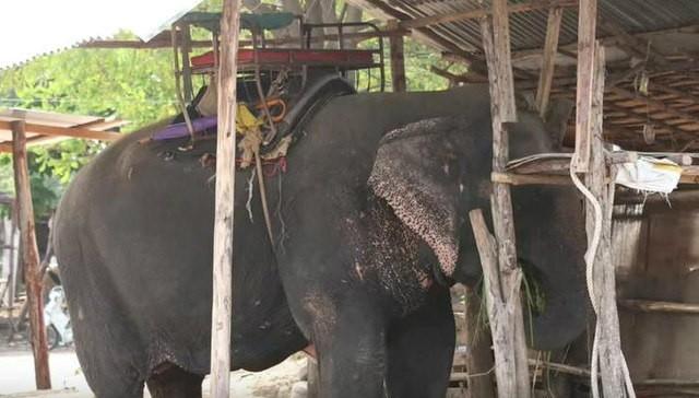 elefante-sontoya-libre-1