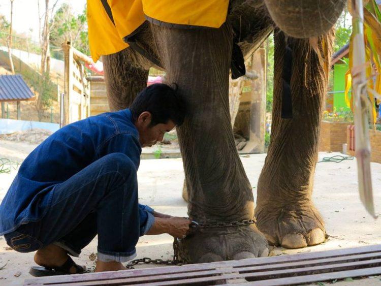 elefante-sontoya-libre-11