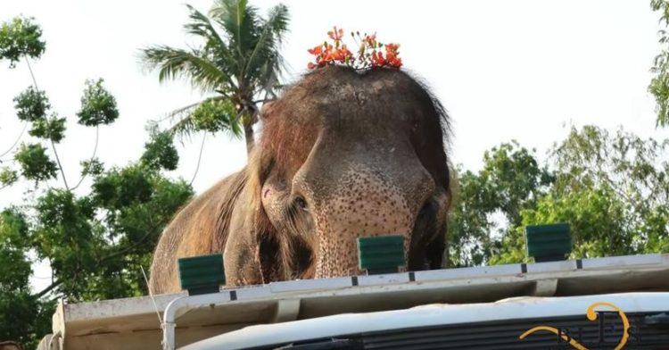 elefante-sontoya-libre-12