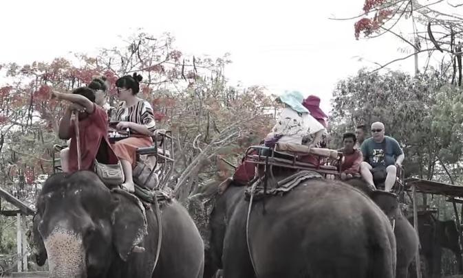 elefante-sontoya-libre-4