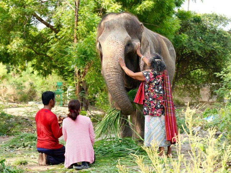 elefante-sontoya-libre-5