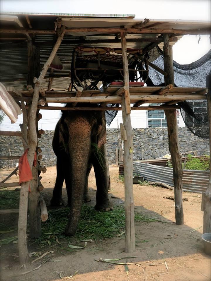 elefante-sontoya-libre-6