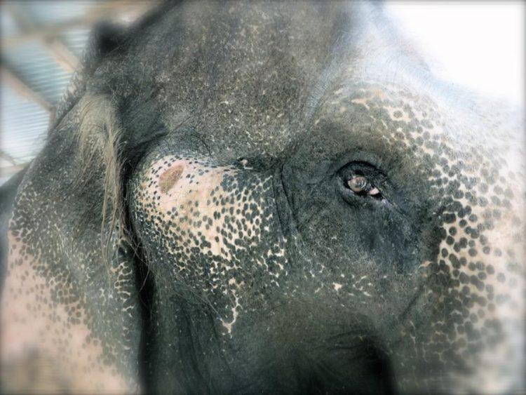 elefante-sontoya-libre-8