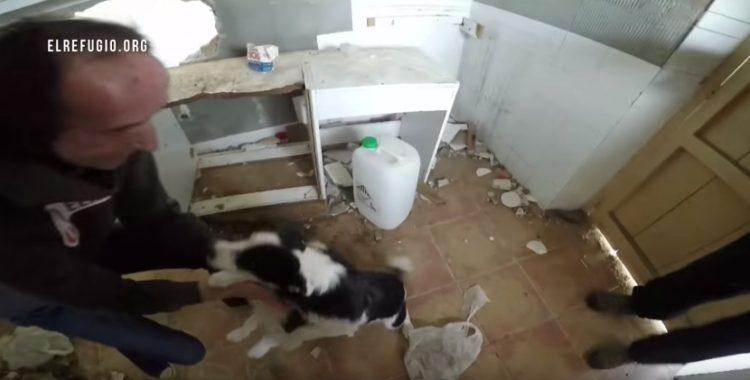familia-de-perros-rescatados2