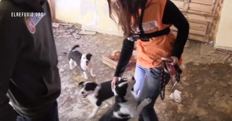 familia-de-perros-rescatados4