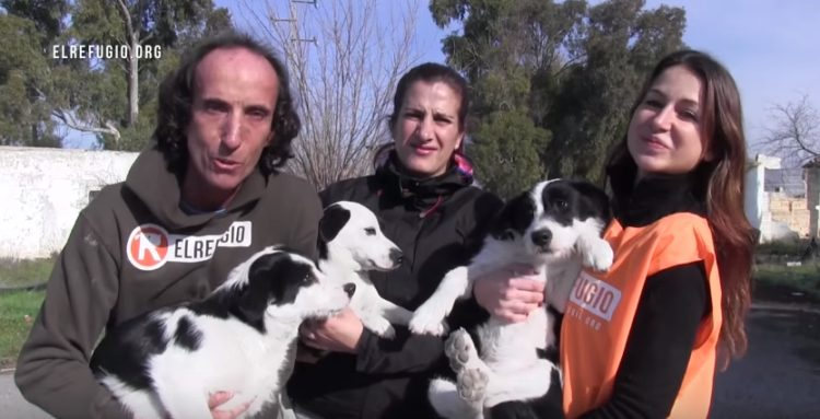 familia-de-perros-rescatados6