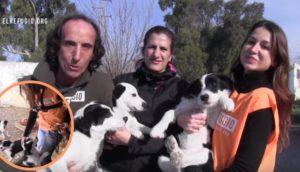 familia-de-perros-rescatados6 - copia