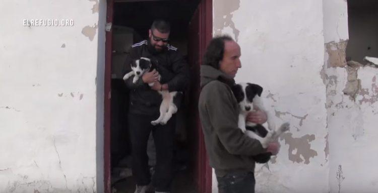 familia-de-perros-rescatados7