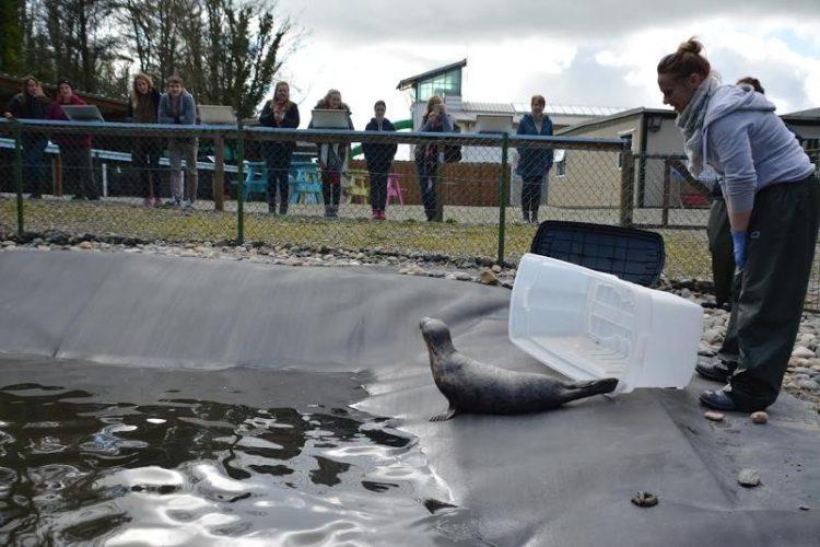 foca rescatada ama su tina 11