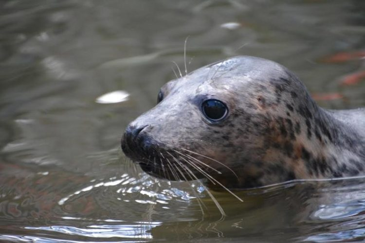 foca rescatada ama su tina 13