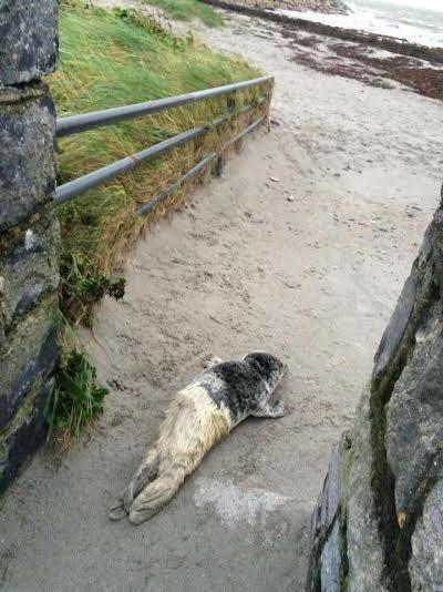 foca rescatada ama su tina 2