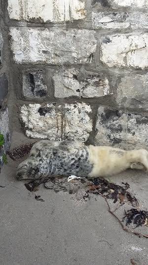 foca rescatada ama su tina 3