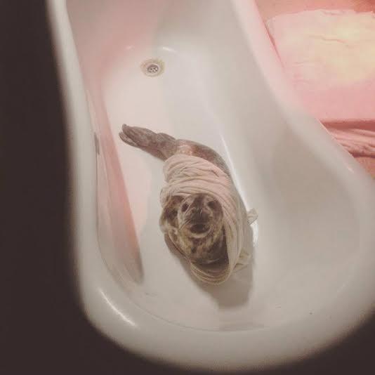 foca rescatada ama su tina 7