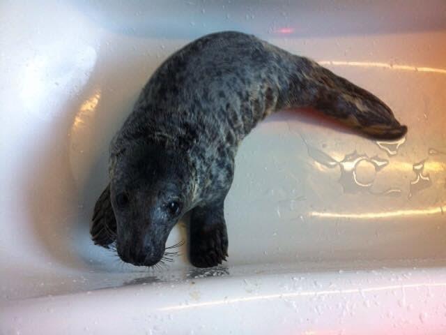 foca rescatada ama su tina 9
