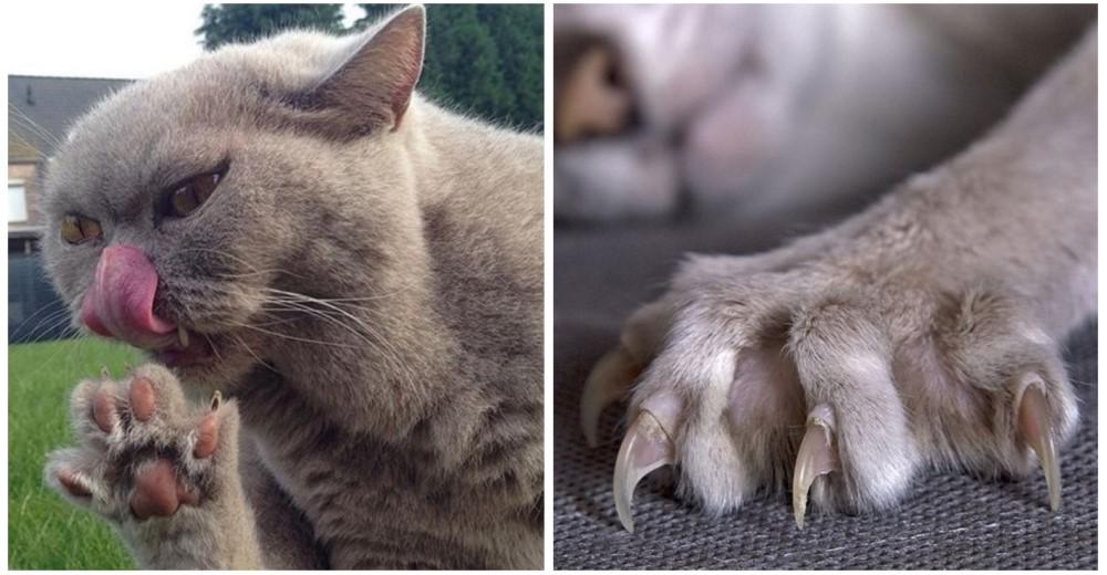 garras-gatos