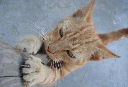 garras-gatos1